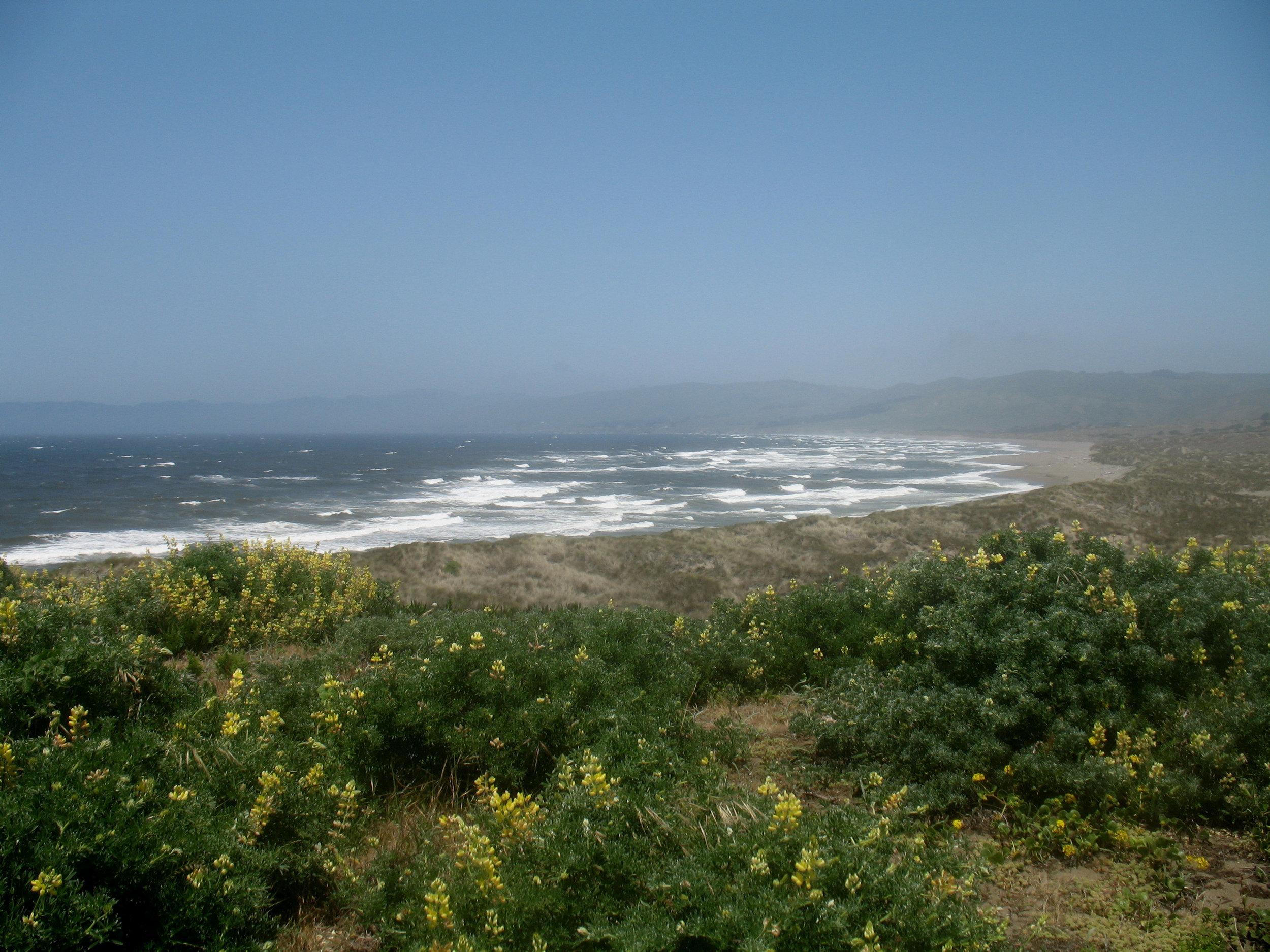 bodega dunes beach