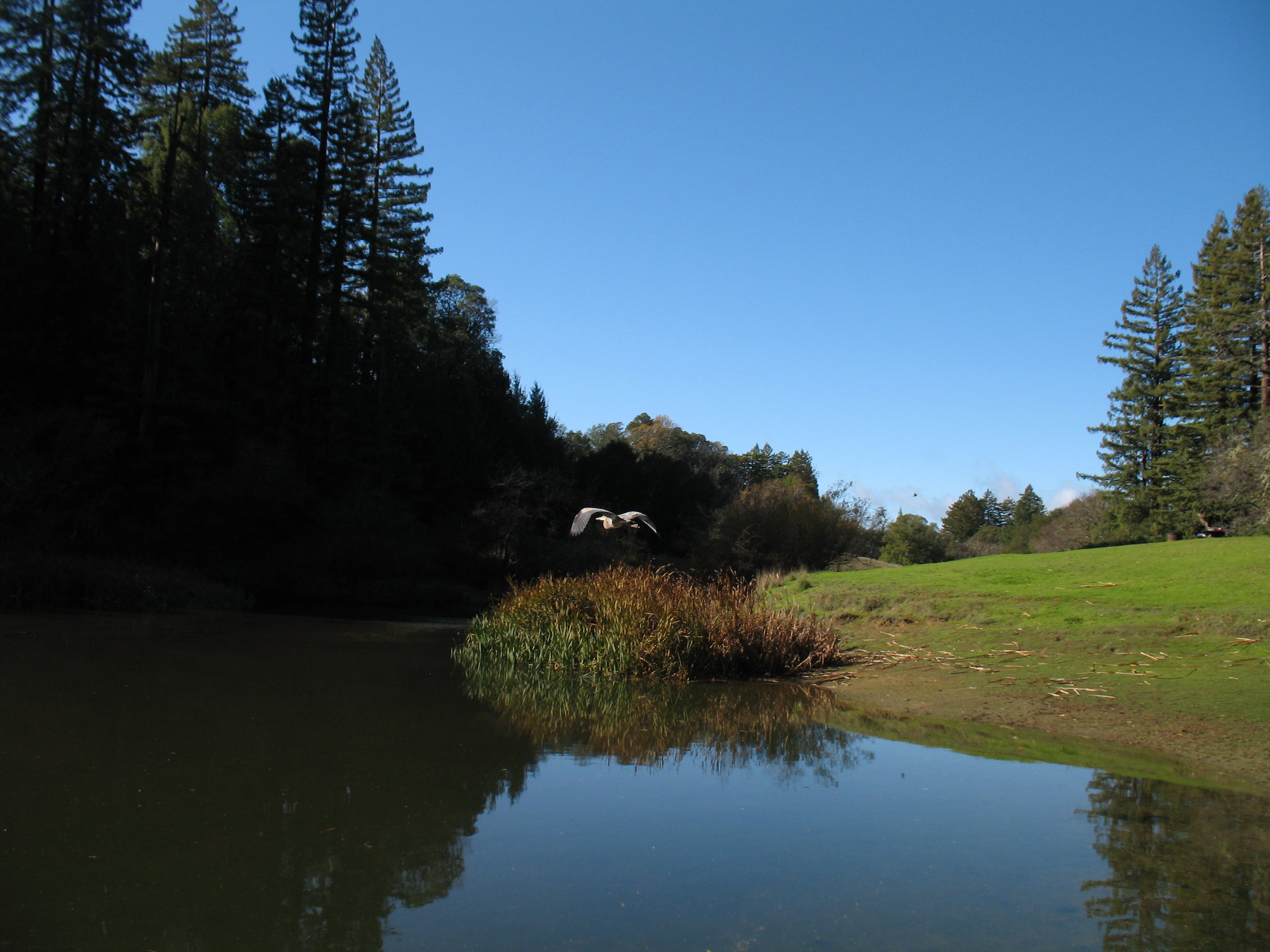Bullfrog Pond, Austin Creek State Recreation Area, Guerneville