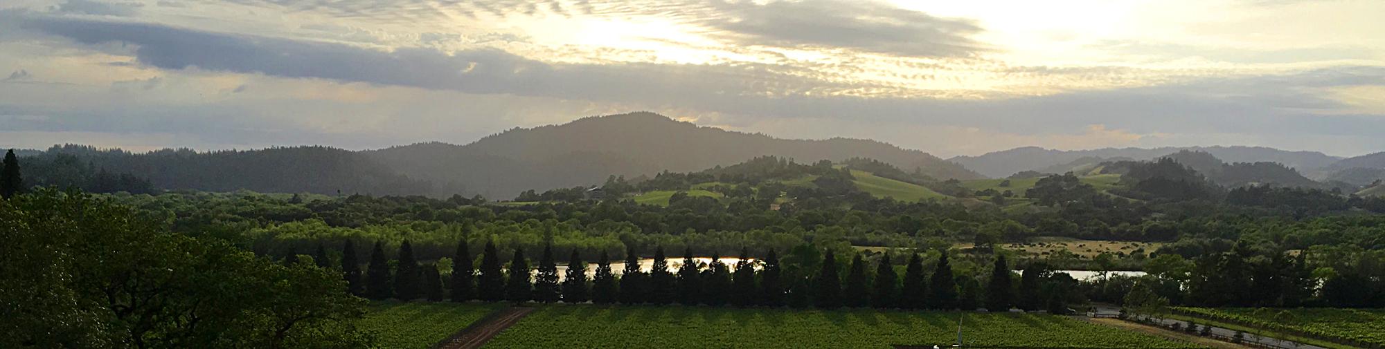 moshin vineyards