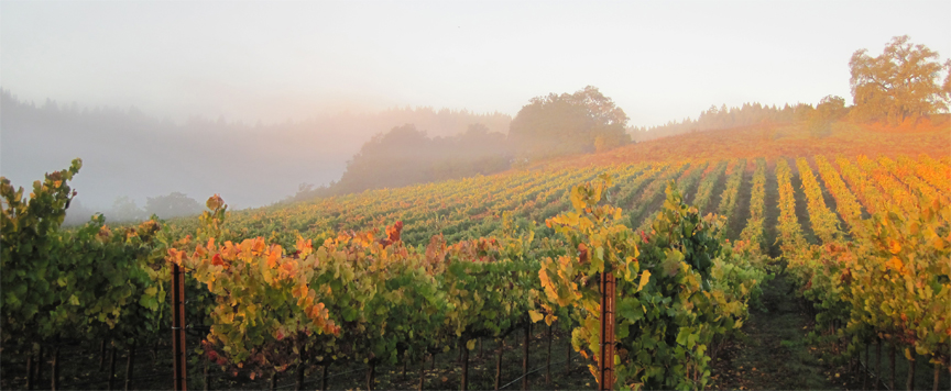 porter creek vineyards