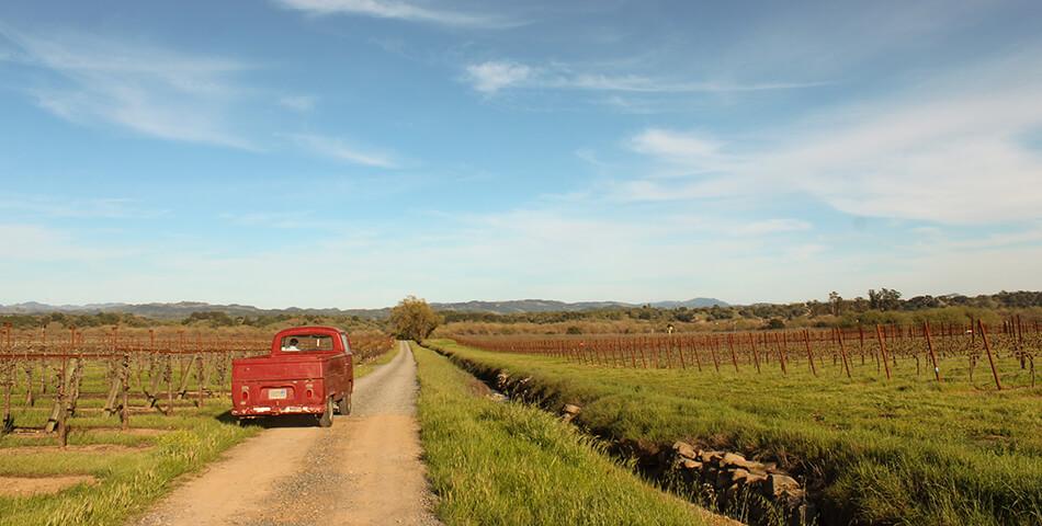 bacigalupi vineyards