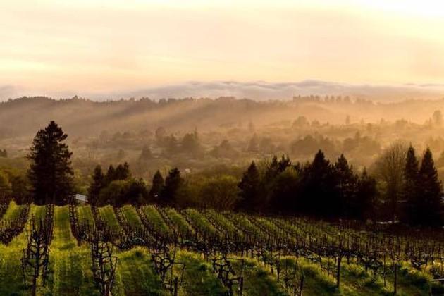 kobler estate winery