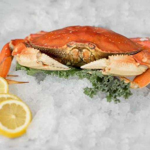 fresh, local dungeness crab at fishetarian fish market