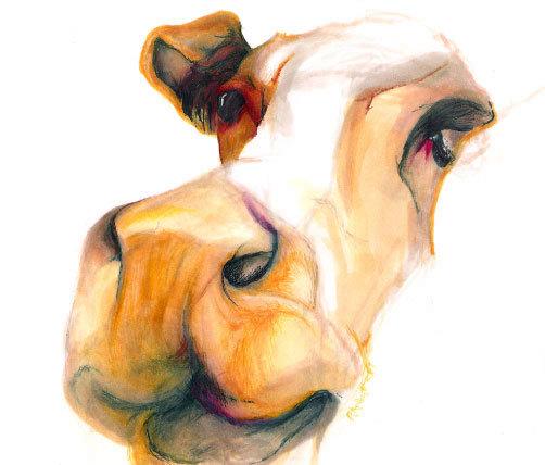 cow_jpg.jpg