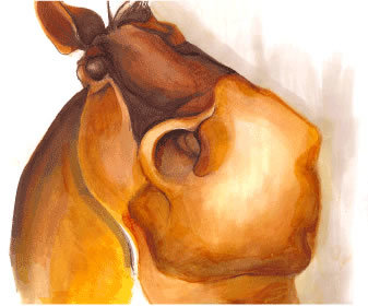 horse_gif.jpg