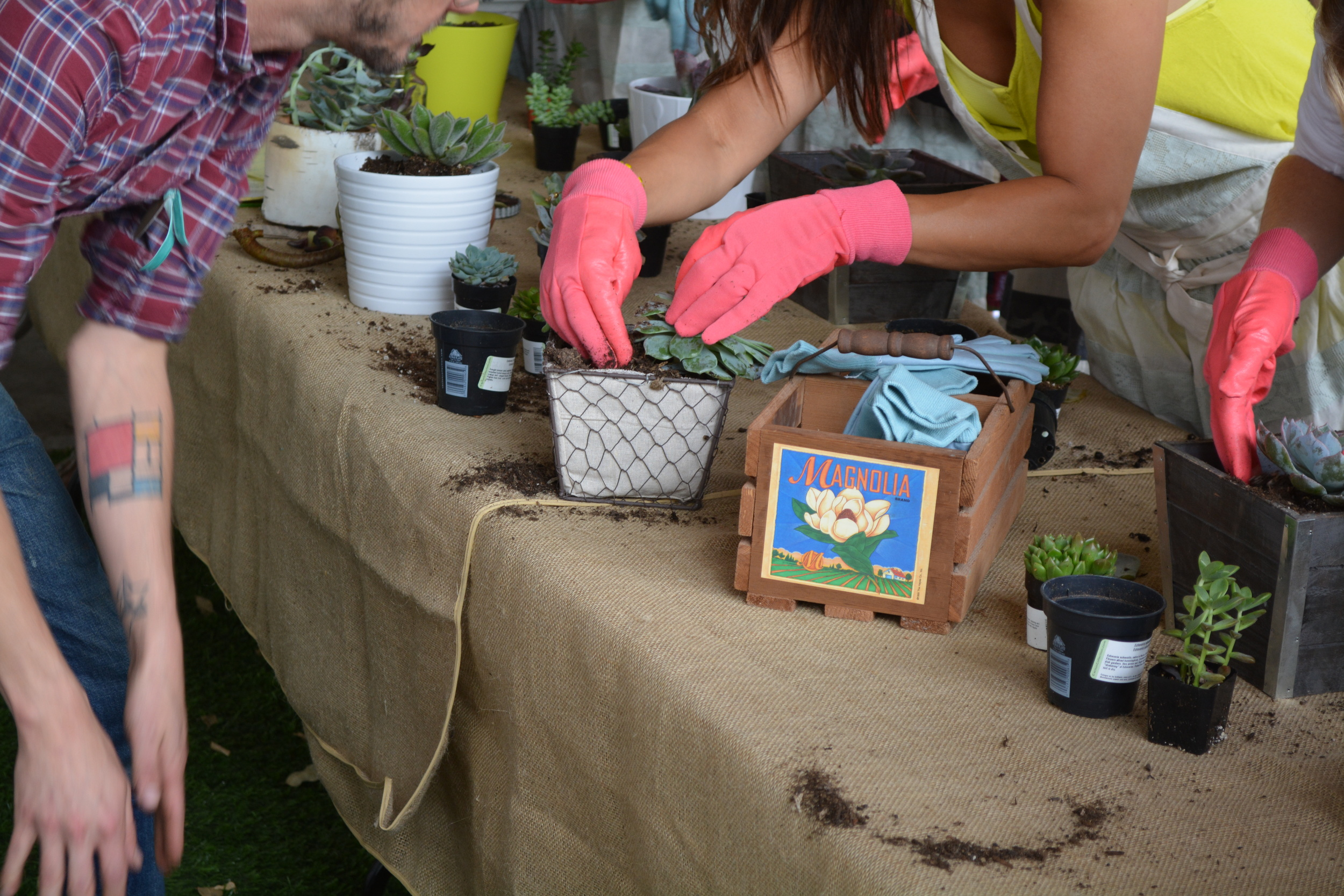 Sustainability Session - Working with Succulents