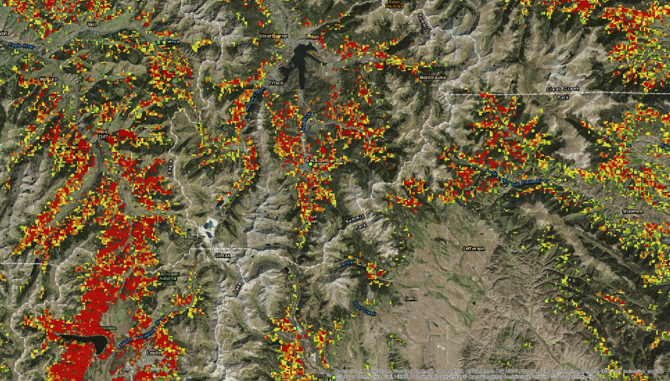 Trees killed by bark beetle in CO