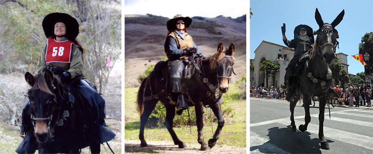 Trail Riding and Parading on MuleBack