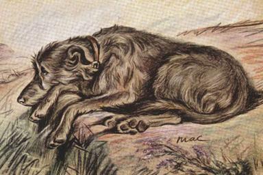 reclining wolfhound by Lucy Dawson