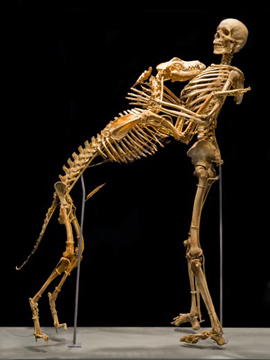 Their skeletons now reside together forever at the Smithsonian, a testament to enduring devotion.