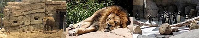 animals at the SB Zoo