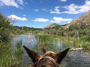 Santa Ynez River at Rancho Oso