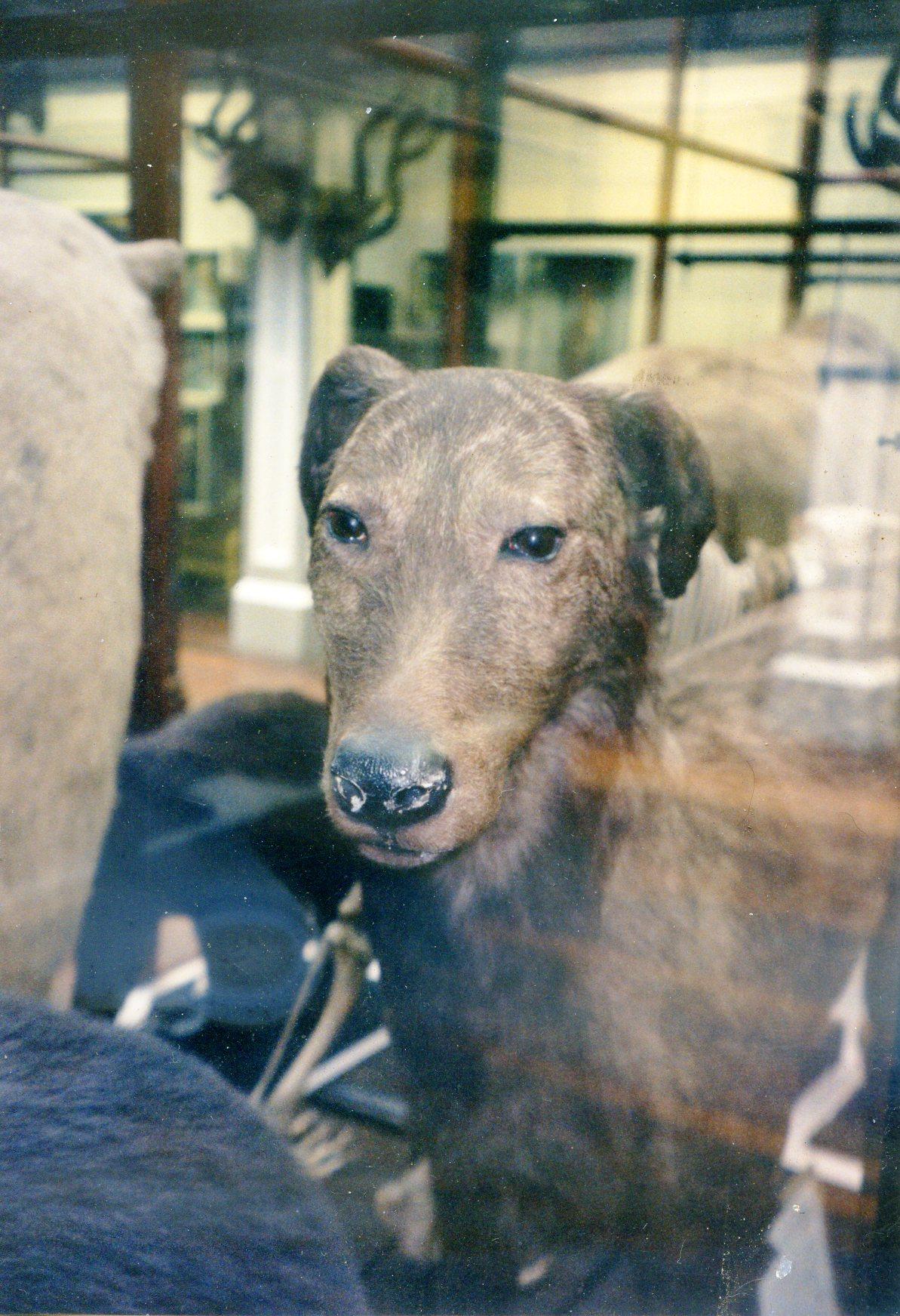 1998 IW head Dublin museum .jpg