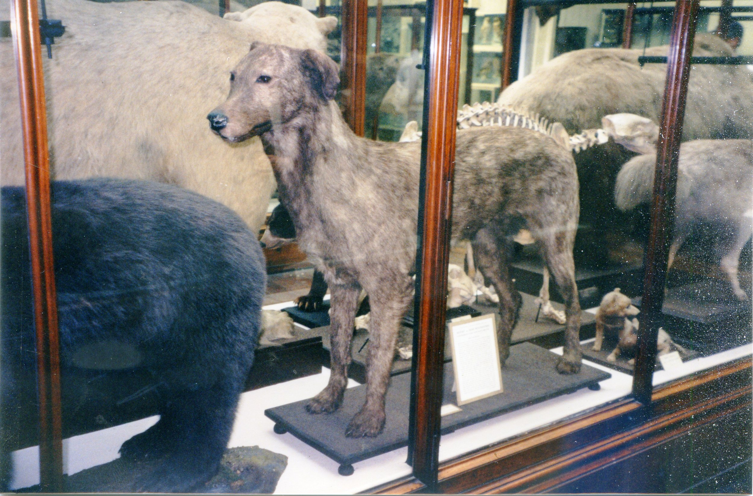 iw in Dublin museum body view.jpg