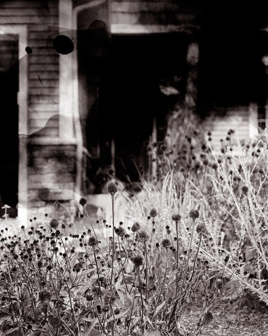 Untitled (black-eyed susans)