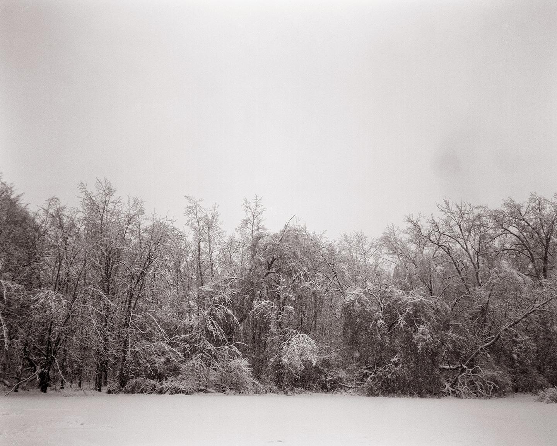 Untitled (Reeds Lake)