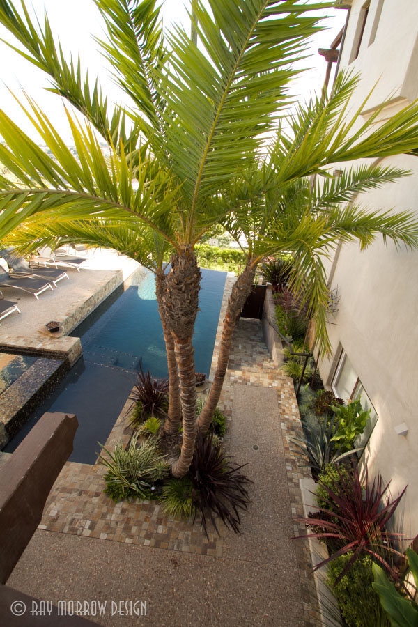 pool-palm-tree-manhattan-beach.jpg