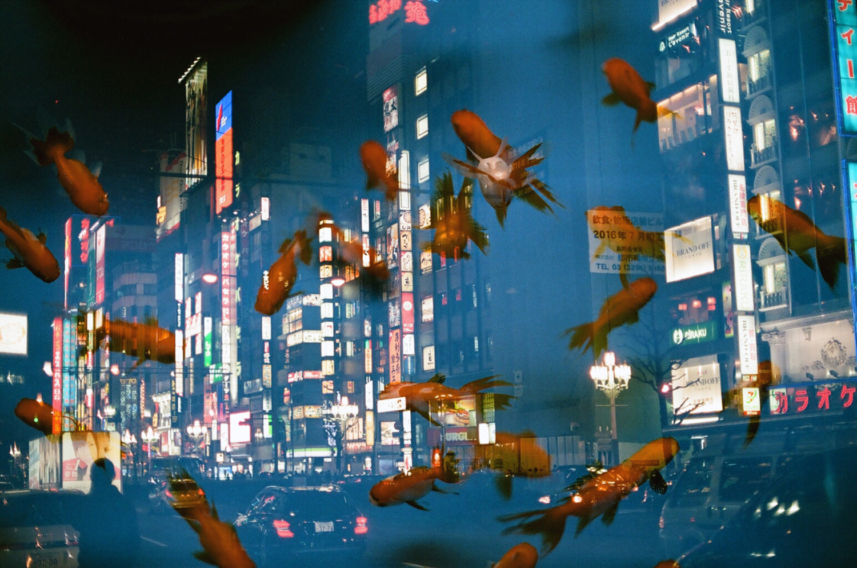 Tokyo vs Goldfish.jpg