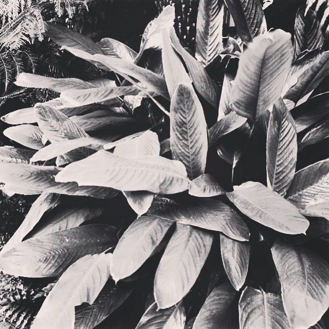 Foliage indulgence #gardenfun #gardenlovers #greengarden #foliage