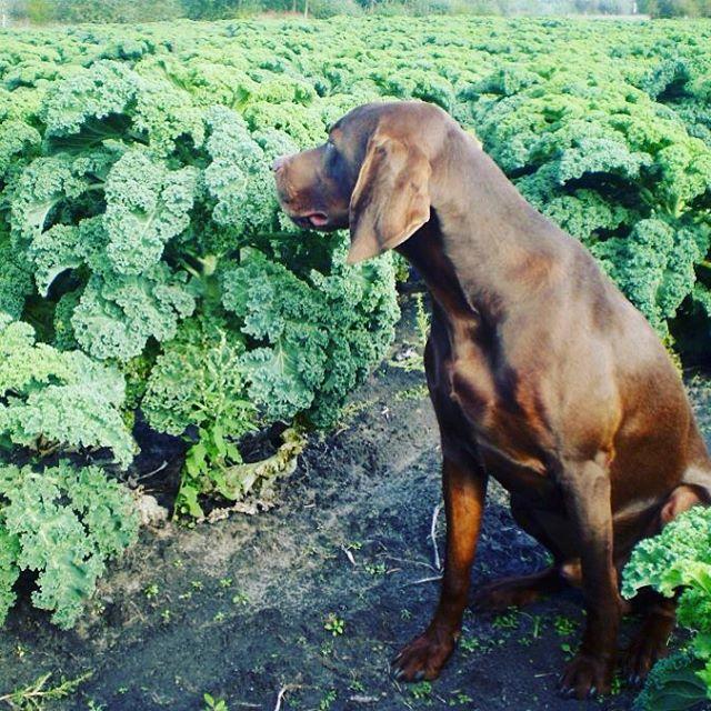 I 💚 Kale! #kalegarden #ediblegarden #eatmorekale