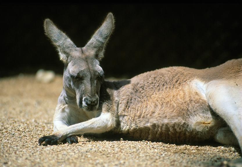 Un ange endormi, NSW, Australia