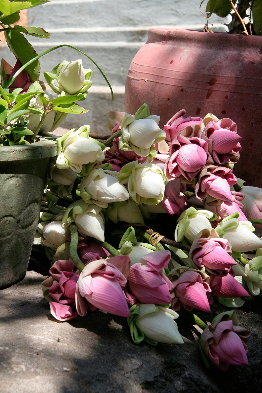 Fleurs de lotus pour les Wat