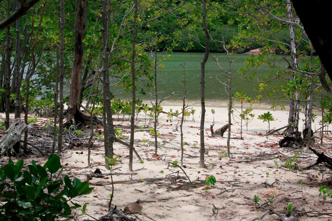 Curieuse, sentier traversant les mangroves
