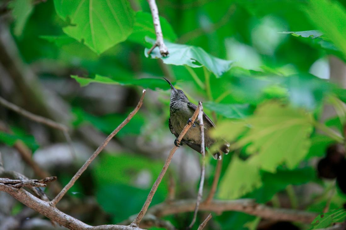 des oiseaux du paradis
