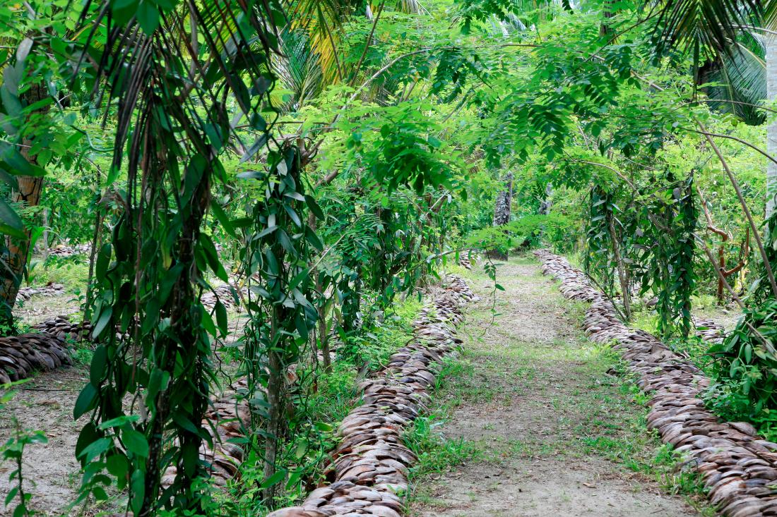 "on traverse des jardins de ""vanilles"""