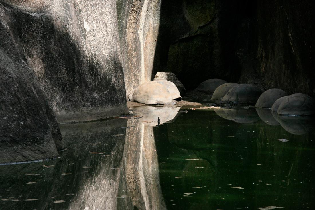 Dans une marre, des tortues sommeillent...