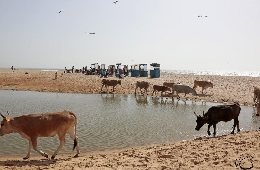 Tea Time sur la plage de Bijilo