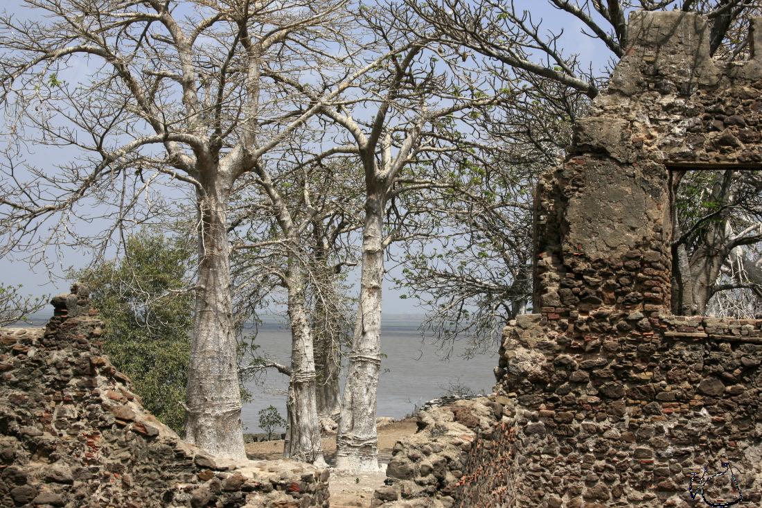 L'île de Saint James / Kunta Kinteh