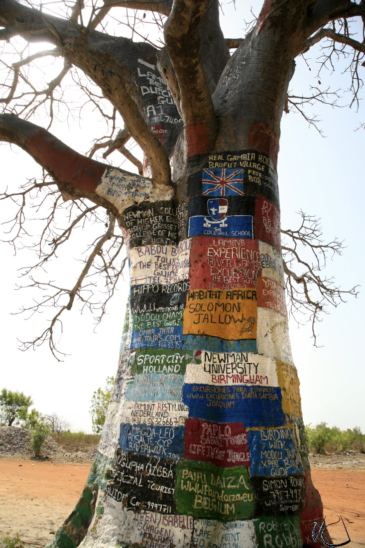 L'arbre 'Internet' à Lamin Lodge