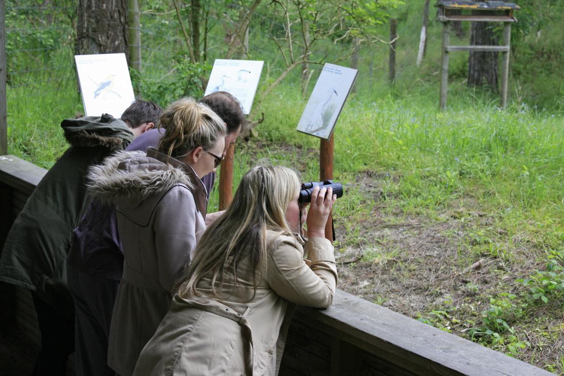 Observation au Parc du Marquenterre