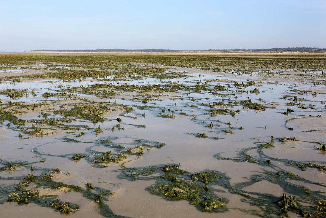 Toujours mouvante, la Baie de Somme