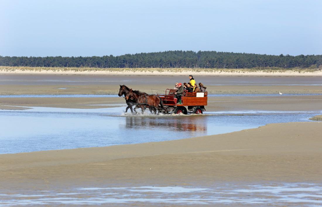 Balade  en calèche dans la Baie de Somme
