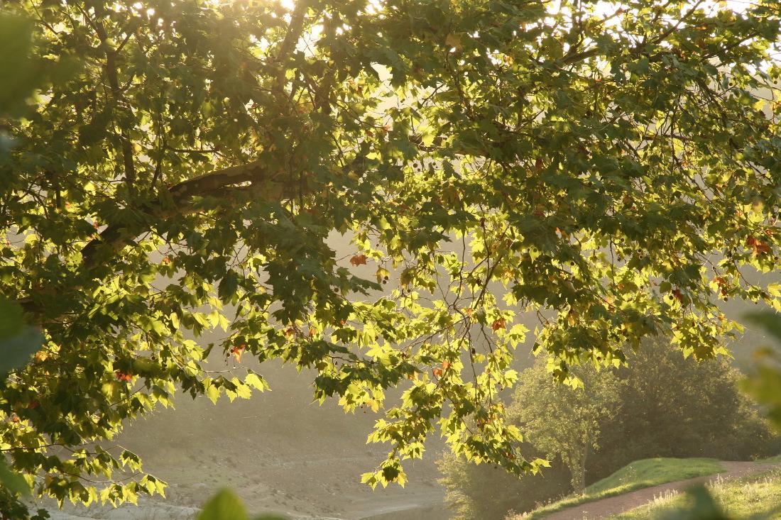 Pays roannais, la douceur des paysages