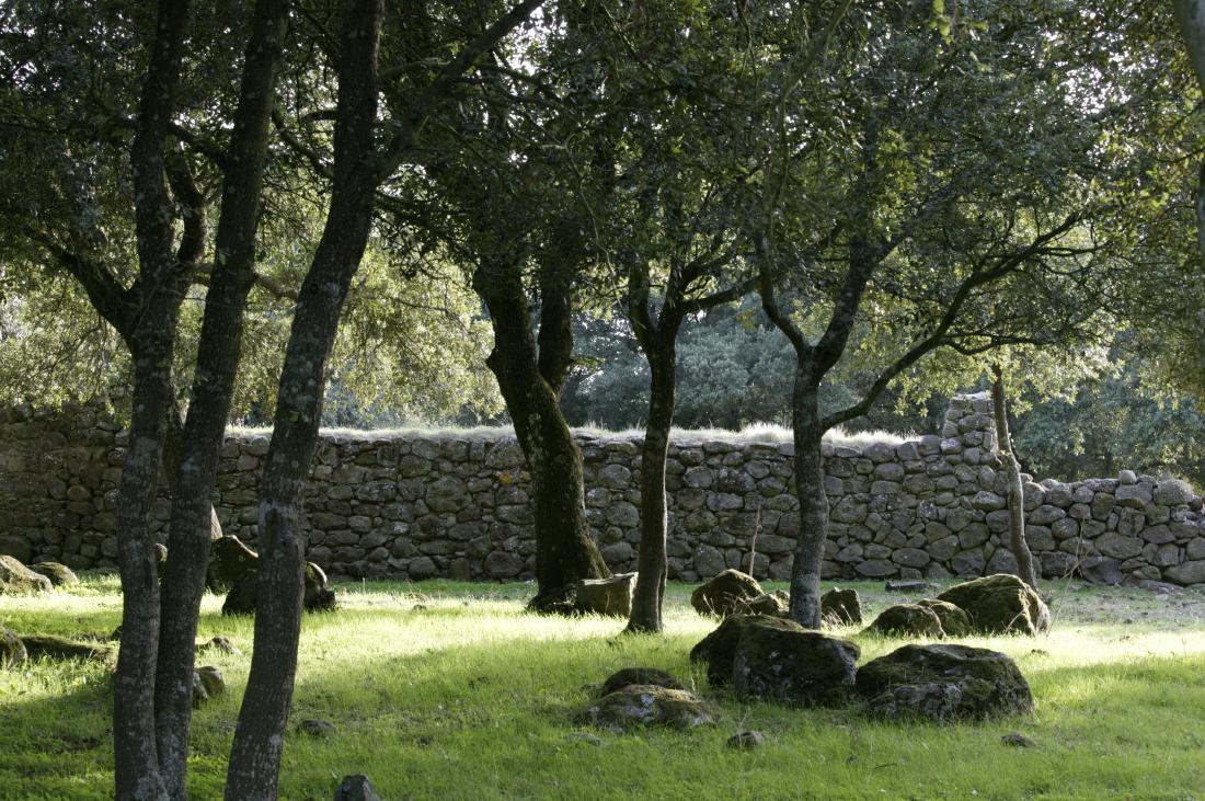Chênes-lièges, plateau Giara du Gesturi (Barumini)