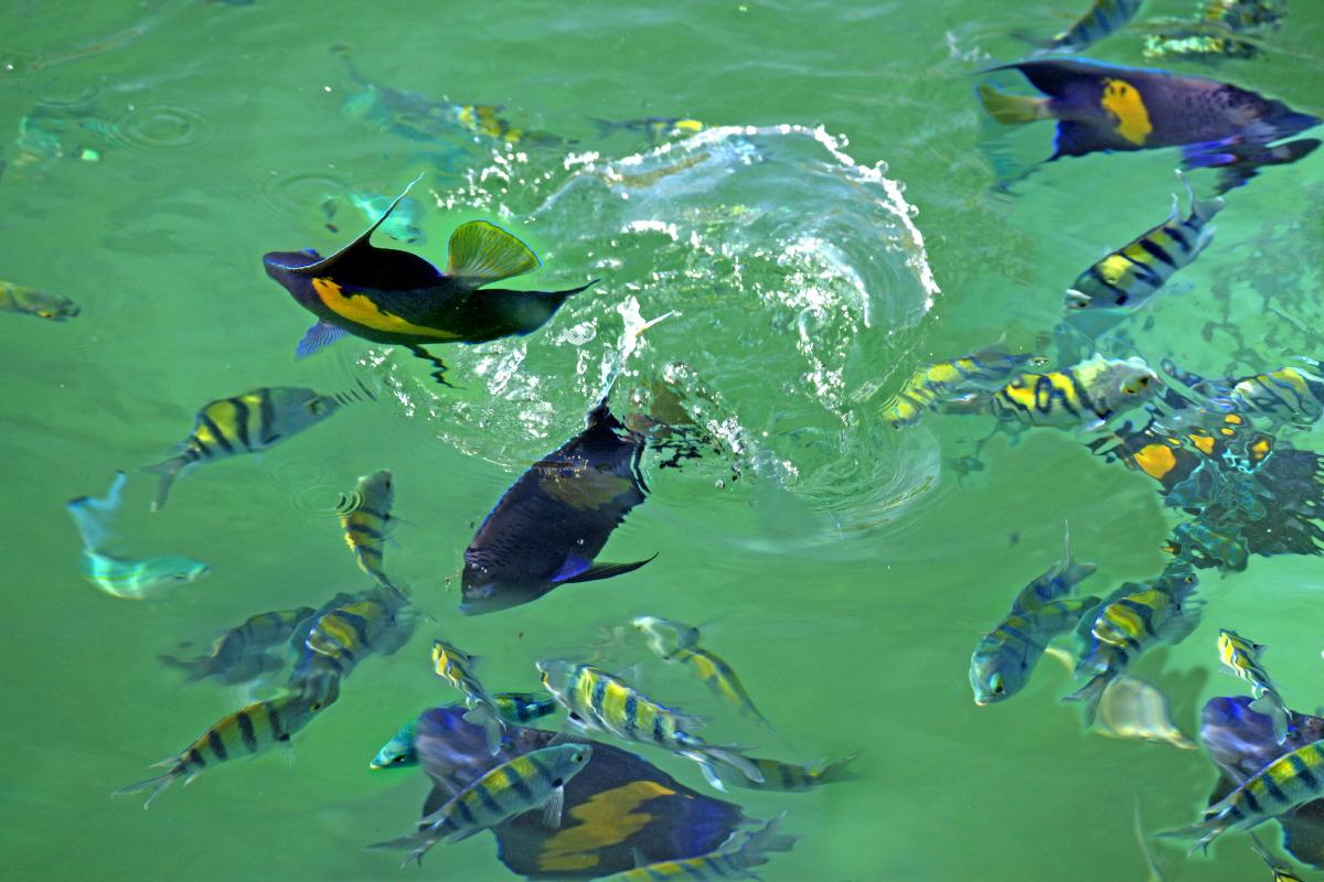 Arrêt snorkeling dans les eaux cristalines...
