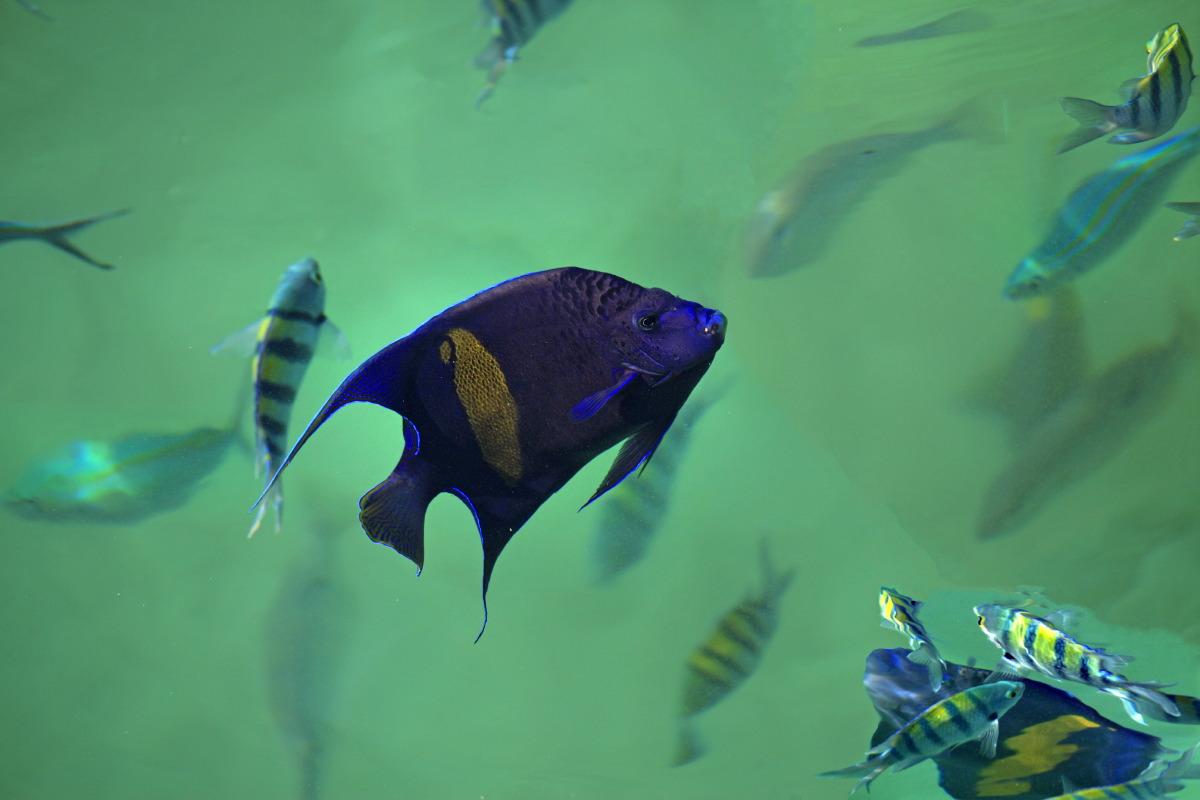 ... entourés d'une multitude de poissons colorés