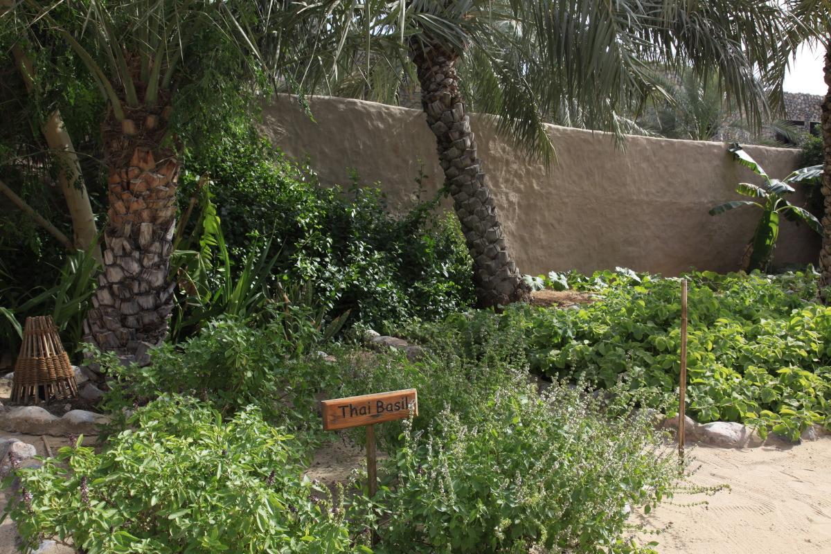 Jardin bio du Spa Resort Six Senses, Zighy Bay, Dibba