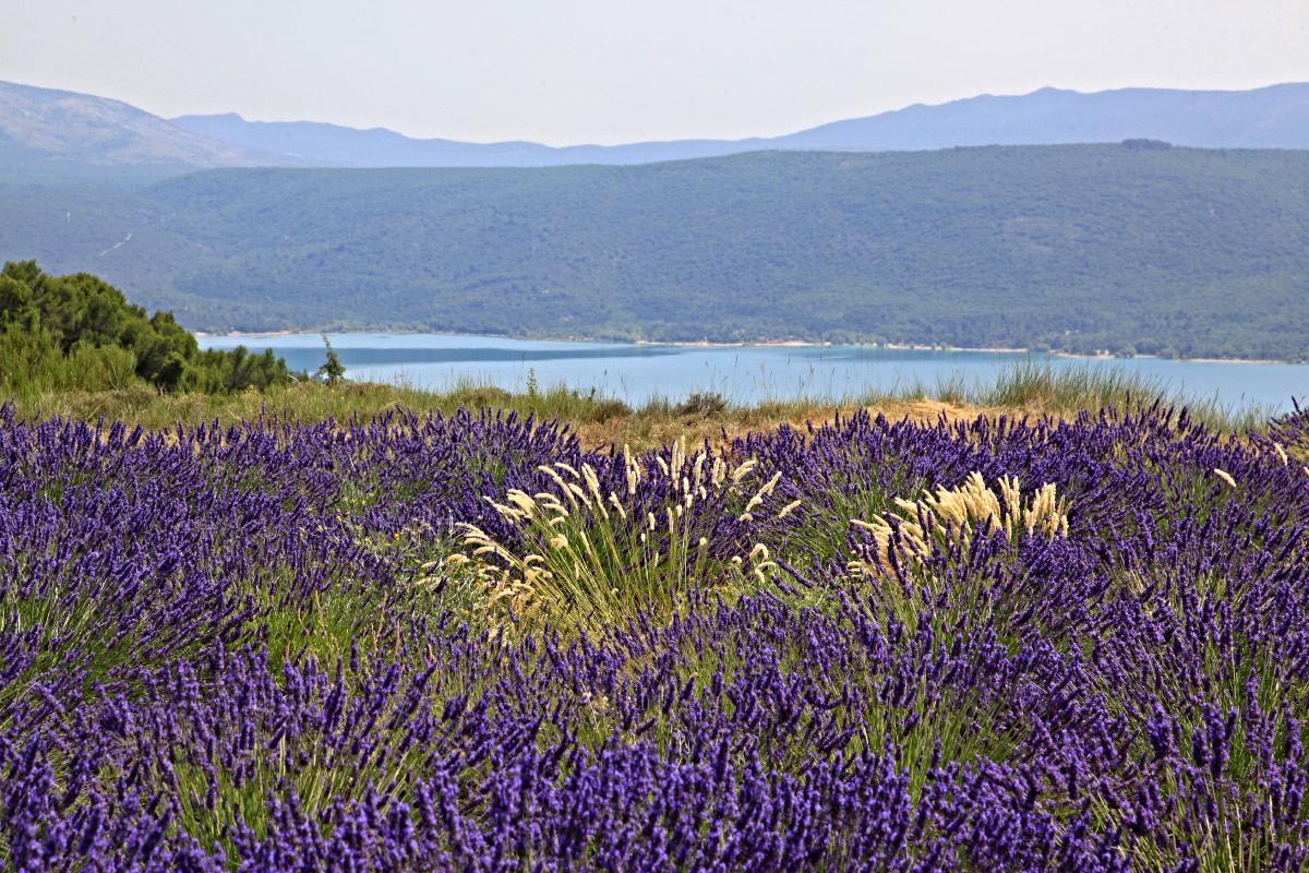 Alpes De Haute Provence Derrière Un Rideau De Lavande