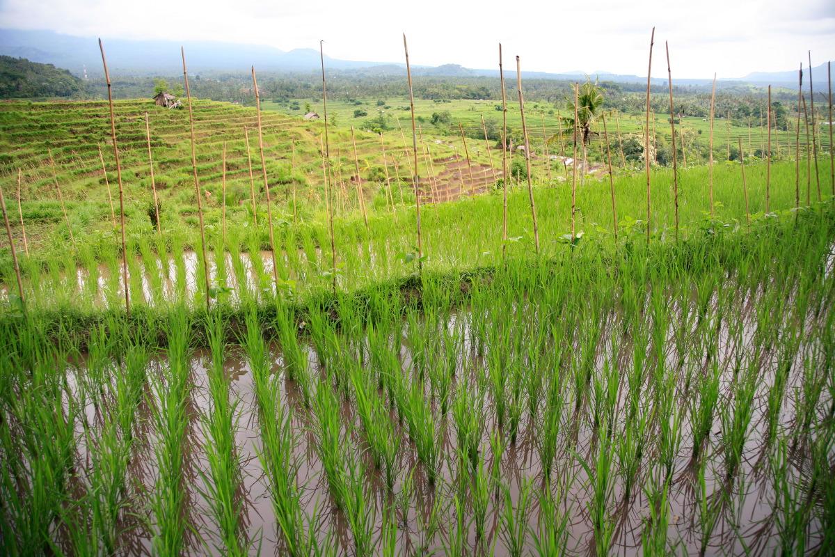 Le charme irrésistible et sacré de Bali