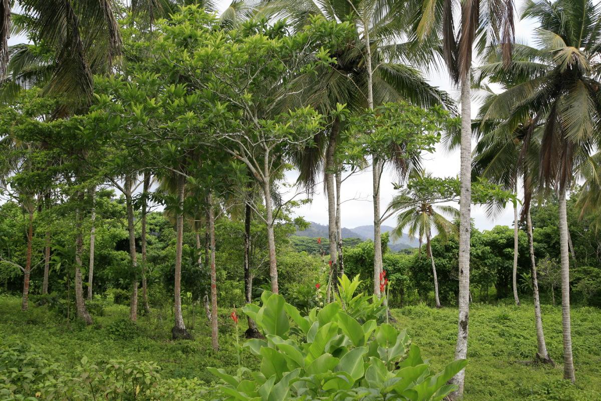 Sublime nature en République dominicaine