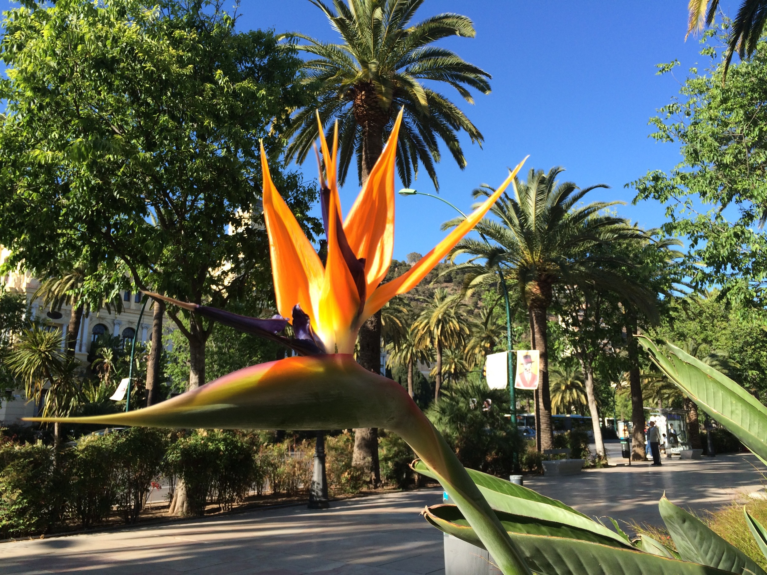 Jardin botanique le long du Paseo Parque