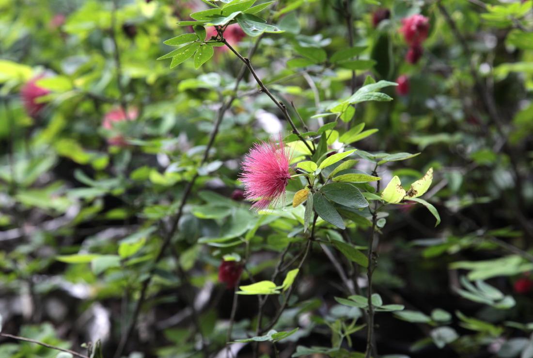 Les couleurs de la flore de Tân Phong