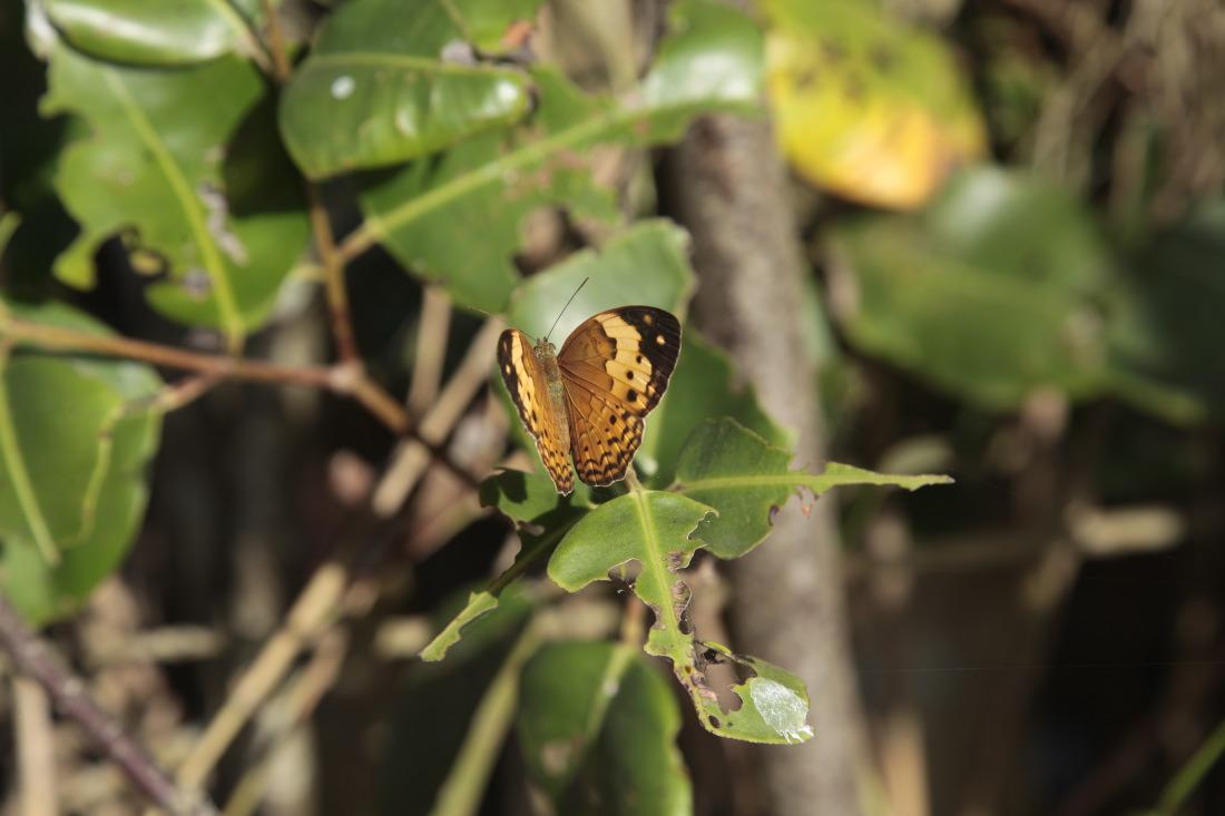 Observer les papillons