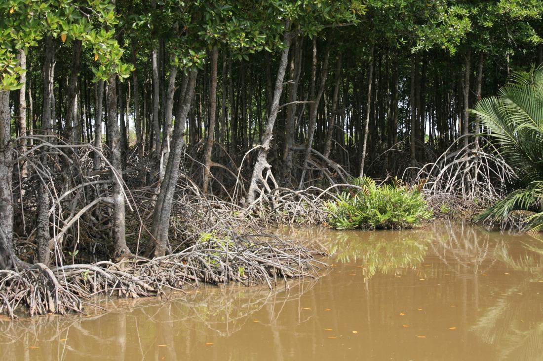 Mangroves près de BaDong
