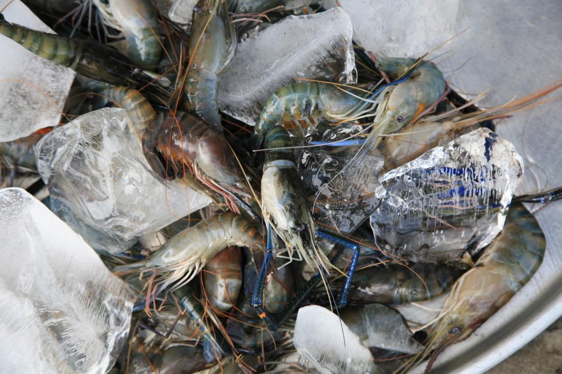 Crevettes fraîches sur le marché de CaiBe