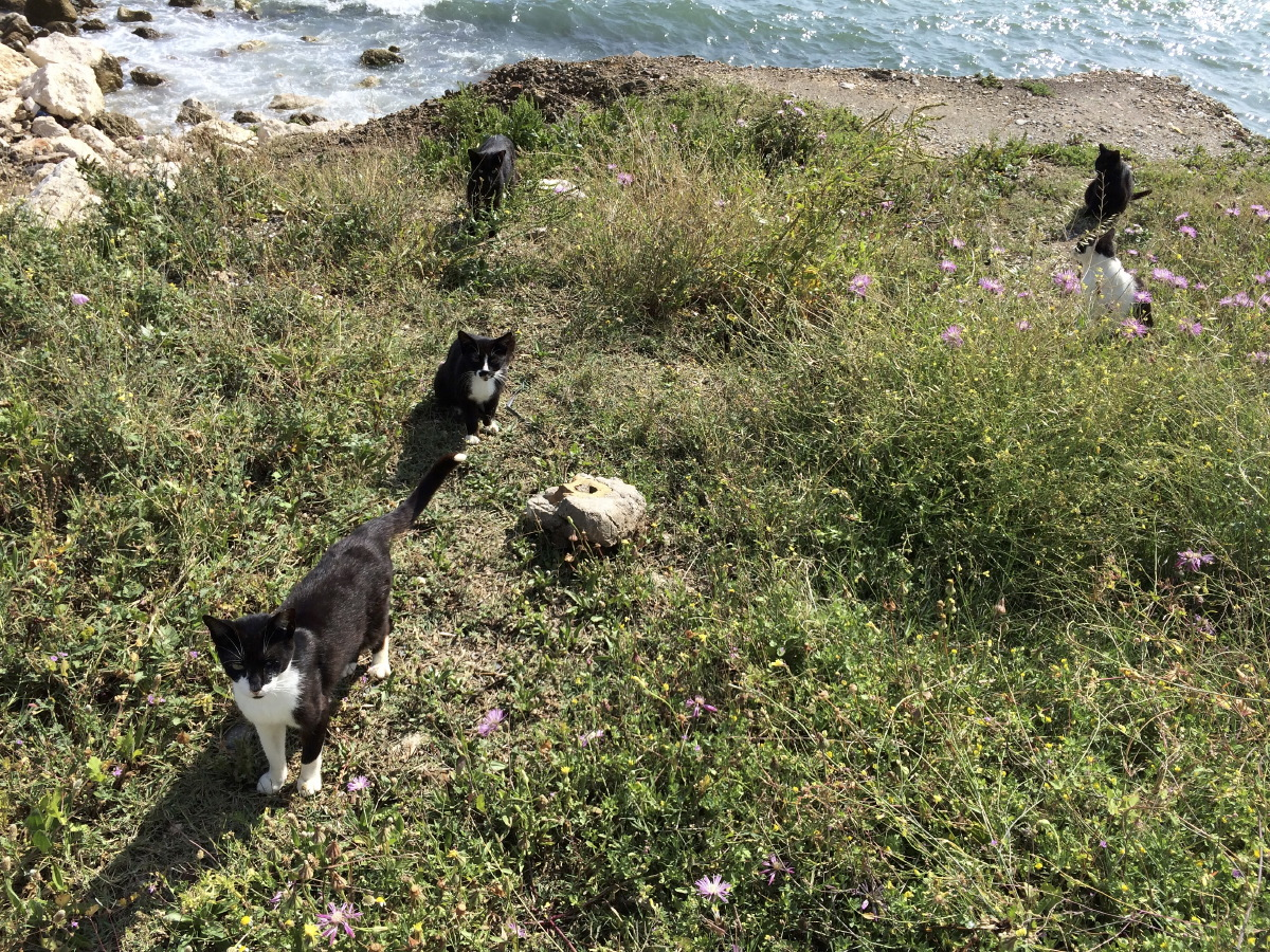 La plage des chats de Malaga